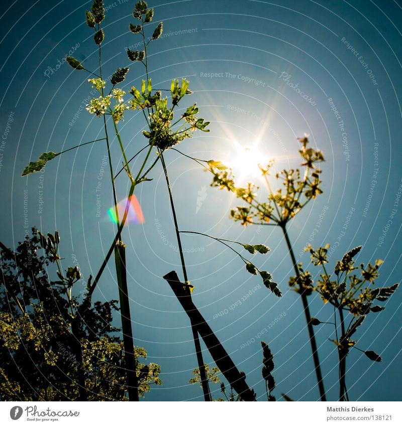 Nature Green Tree Plant Sun Summer Animal Meadow Lanes & trails Hiking Bushes Pteridopsida Clearing Aperture Wayside Caught by a speed camera