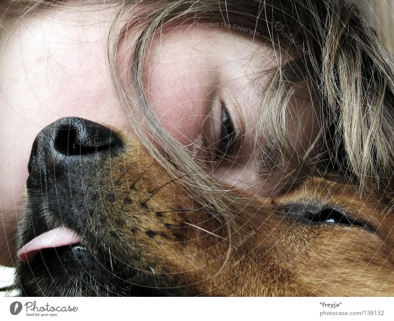 Joy Hair and hairstyles Dog Contentment Cuddling