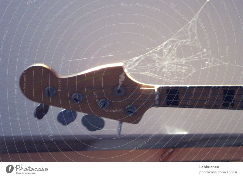 Guitar on net Spider's web Leisure and hobbies Music Musical instrument