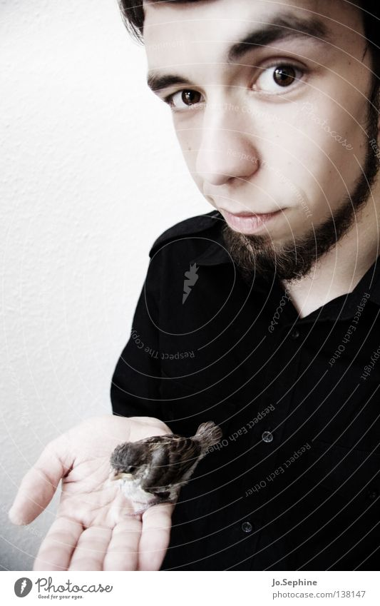 he likes birds. Man Adults Cute Soft Trust Safety (feeling of) Love of animals Sparrow Fragile Protect Look after To hold on Looking Face Facial hair Shirt