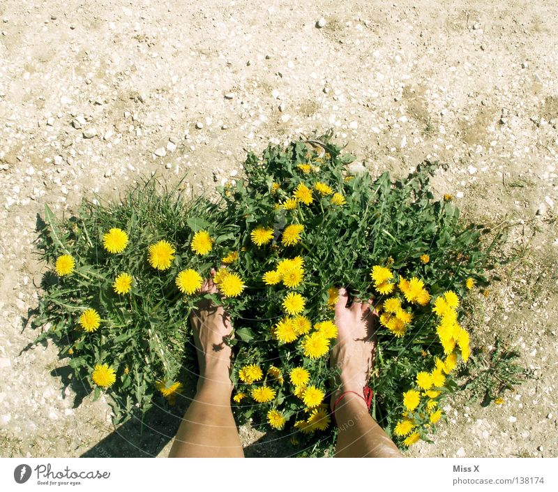 Eco slippers II Colour photo Exterior shot Island Woman Adults Legs Feet Earth Spring Drought Flower Grass Field Footwear Stone Dirty Dry Brown Yellow Gray