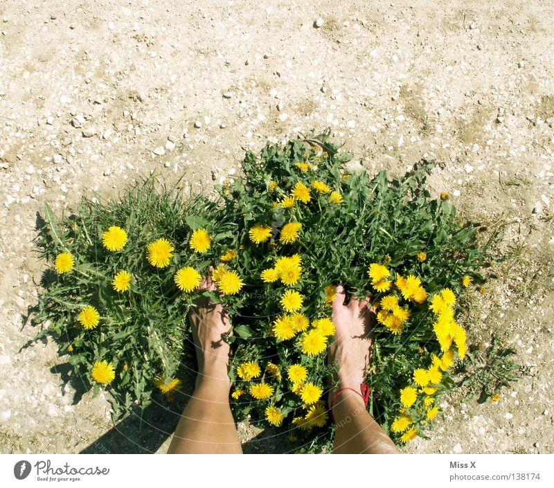 Woman Green Flower Adults Yellow Gray Grass Stone Spring Legs Feet Brown Footwear Field Earth Dirty
