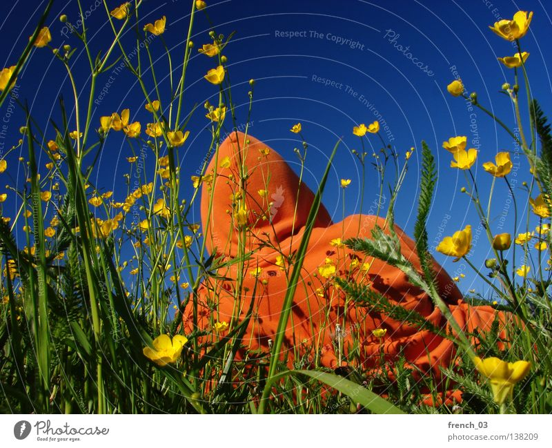 yellow-orange-blue combo II Plant Flower Blossom Man Grass Meadow Field Seasons Summer Cattle Spring Agriculture Events Blade of grass Stalk Hooded (clothing)