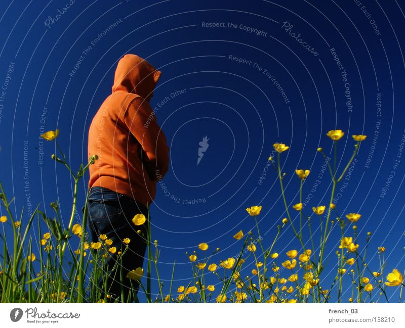 yellow-orange-blue combo Plant Flower Blossom Man Grass Meadow Field Seasons Summer Cattle Spring Agriculture Events Blade of grass Stalk Hooded (clothing)