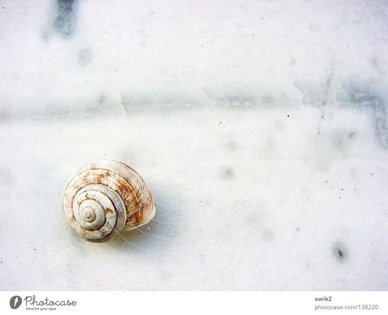 Nature White Loneliness Calm Small Bright Arrangement Elegant Idyll Wait Transience Near Derelict Firm Exotic Snail