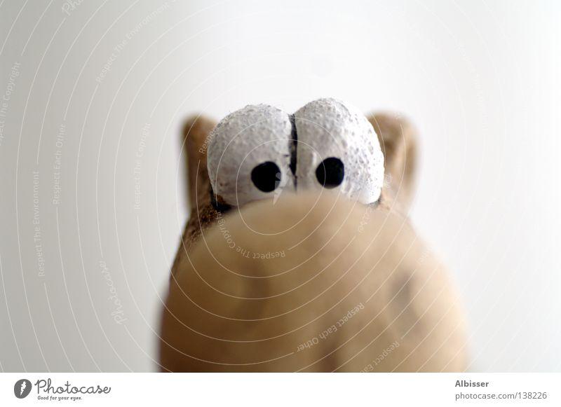 White Joy Black Animal Eyes Style Head Brown Funny Nose Large Search Humor Brash Comic