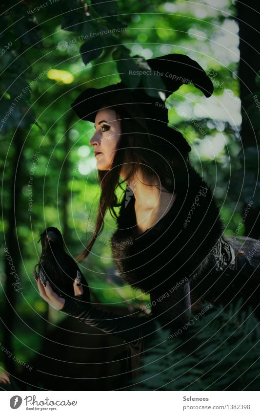 poison witch Carnival Hallowe'en Human being Feminine Woman Adults 1 Environment Nature Tree Forest Stole Hat Bird Animal Creepy Witch Carnival costume