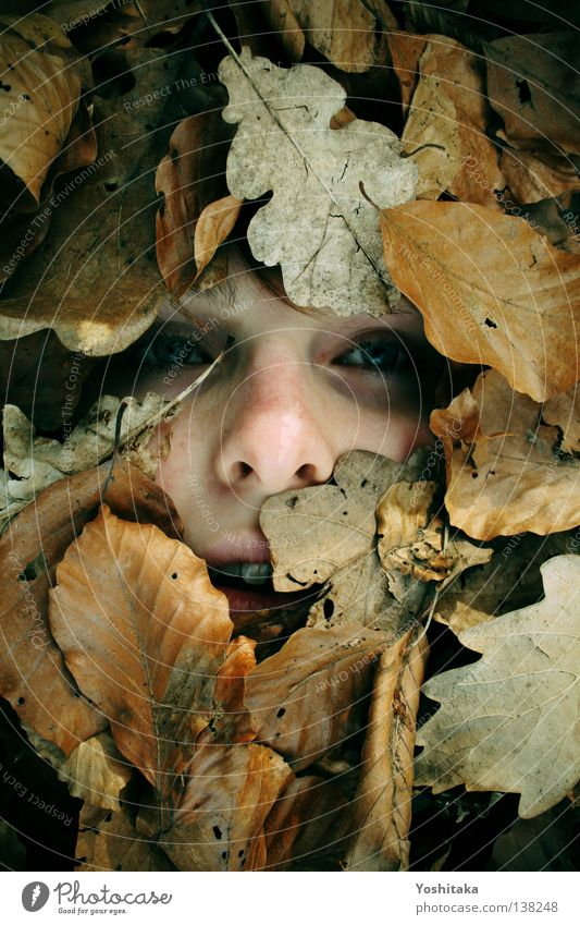 Woman Girl Face Calm Leaf Eyes Loneliness Far-off places Cold Death Mouth Brown Child Nose Grief Dangerous