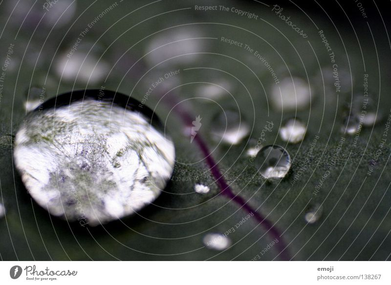 Water Joy Dark Rain Glittering Drops of water Wet Round Clarity Near Damp Rachis Bubble