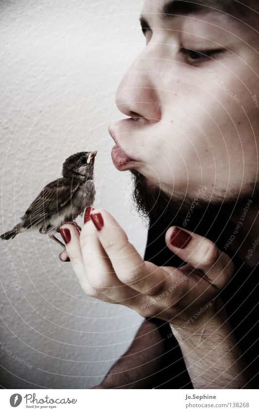 Man White Hand Black Face Adults Love Baby animal Bird Exceptional Feather Cute Soft To hold on Facial hair Kissing