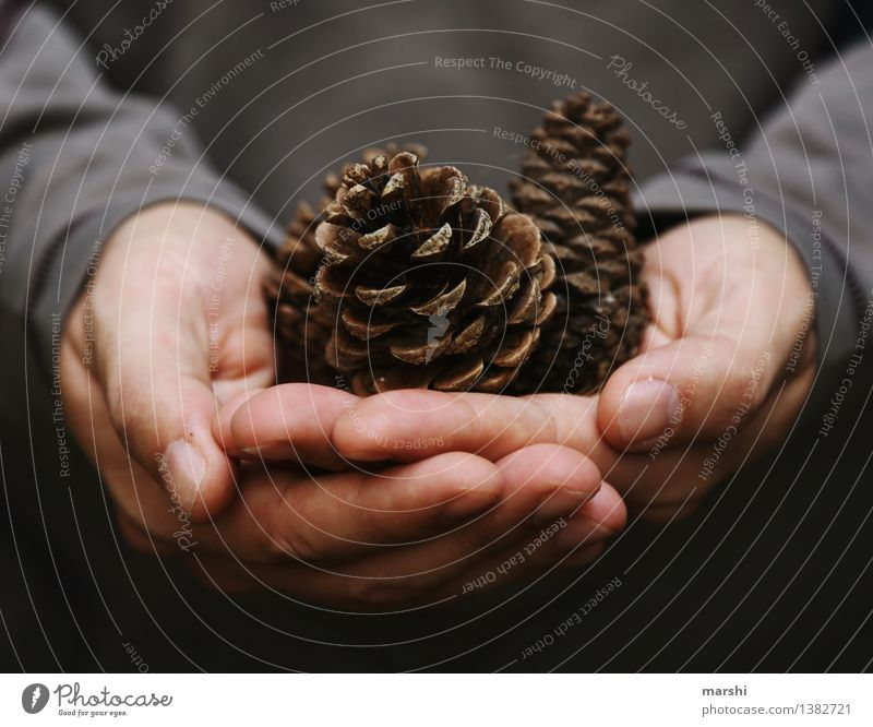 discovery Human being Masculine Man Adults Hand Nature Plant Autumn Winter Moody Coniferous trees Cone Find Collector Discovery Autumnal Colour photo