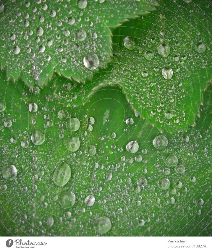 Nature Plant Green Water Landscape Leaf Cold Sadness Rain Weather Floor covering Grief Drop Fluid Freeze Cry