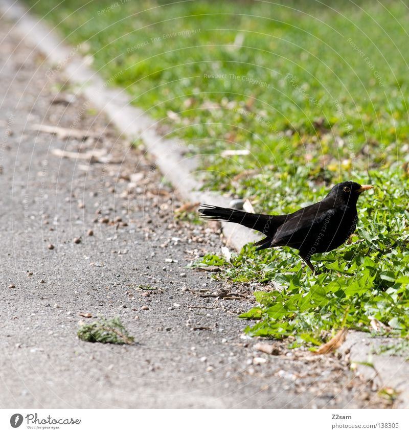 mei a vogerl Bird Animal Tar Concrete Meadow Green Grass Small Break Calm Loneliness Nature black Wing Line