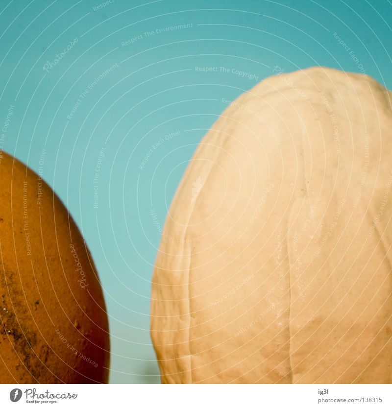 generation conflict Hen's egg Macro (Extreme close-up) Section of image Partially visible Egg cosy Bright background