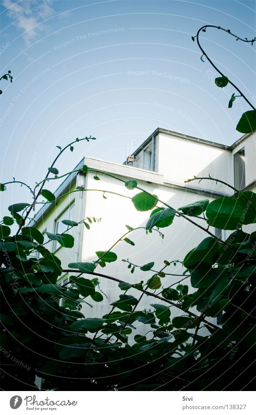 neighborhood Green White Window Leaf Clouds Modern Sky Blue Twig Stalker