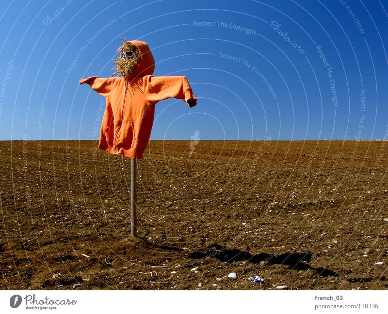 scare crow Sky Nature Green Blue Clouds Loneliness Meadow Freedom Landscape Grass Wood Line Weather Orange Bird Fear