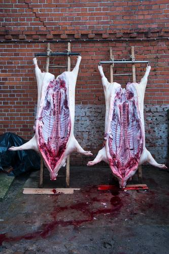 Animal Natural Death Food Authentic Nutrition Transience Agriculture Pet Meat Respect Blood Forestry Craftsperson Sausage Swine