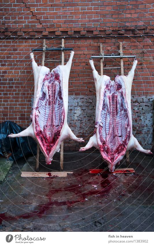 home slaughtering Food Meat Sausage Nutrition Craftsperson Killing Butcher Agriculture Forestry Animal Pet Farm animal Dead animal Swine 2 Authentic Natural