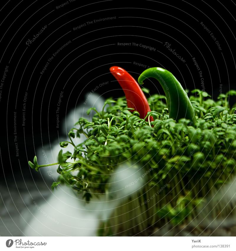 Green Red Black Dark Nutrition Cold Food Garden Style Healthy Going Fog Walking Hiking Design Fresh