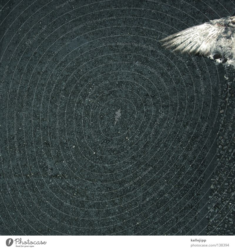 City Animal Street Death Bird Peace Feather Wing Asphalt Fluid Symbols and metaphors War Pigeon Accident Crash Eagle