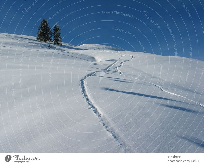 Into the snow pandemonium Cross-country ski trail Fir tree Mountain Snow Landscape Skiing Sky