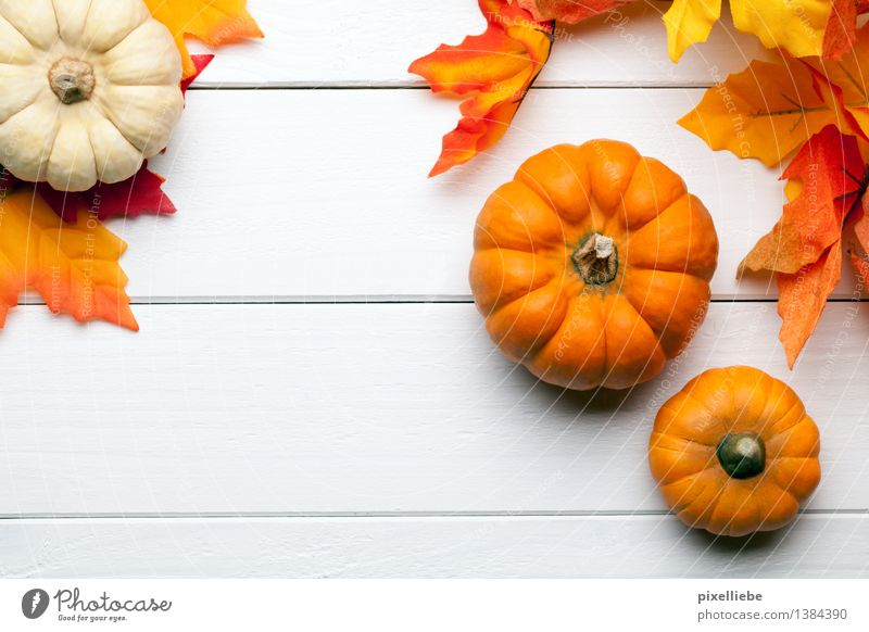 Pumpkin Time Food Vegetable Nutrition Organic produce Vegetarian diet Diet Healthy Eating Decoration Table Kitchen Restaurant Feasts & Celebrations Thanksgiving