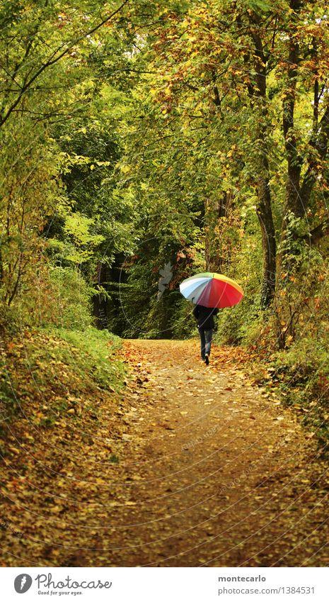 autumn walk Environment Nature Landscape Plant Elements Earth Autumn Bad weather Bushes Foliage plant Wild plant Leaf Tree Forest Footpath Umbrella