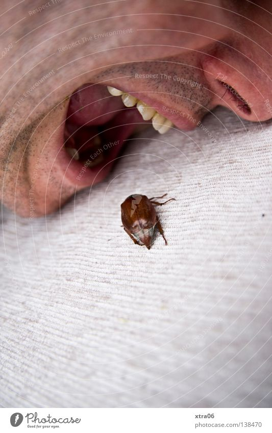 Human being Man Nutrition Mouth Eating Food Nose Teeth Insect Meat To feed Beetle Crawl May bug