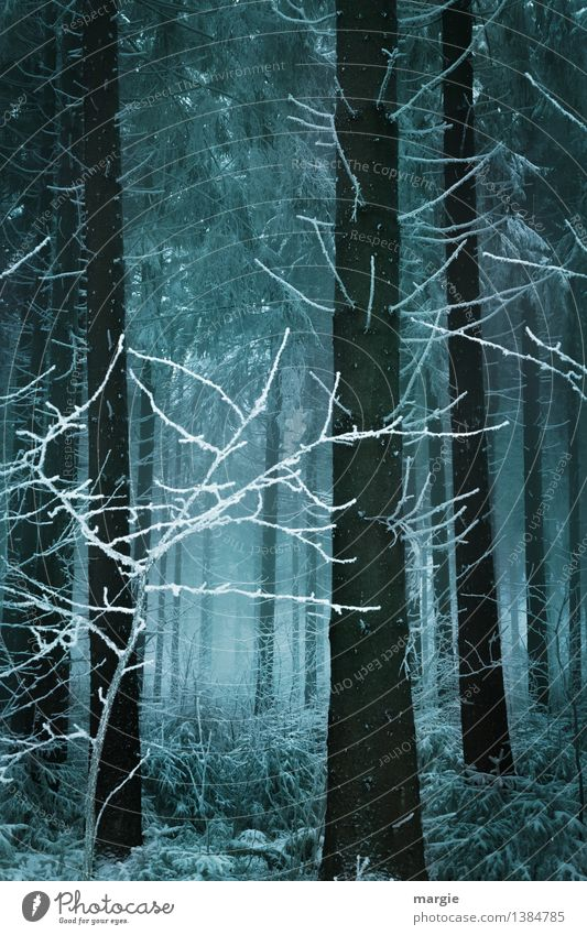 Ray of hope: A dark winter forest with a light Vacation & Travel Winter Snow Winter vacation Nature Animal Earth Climate Fog Ice Frost Snowfall Tree Forest