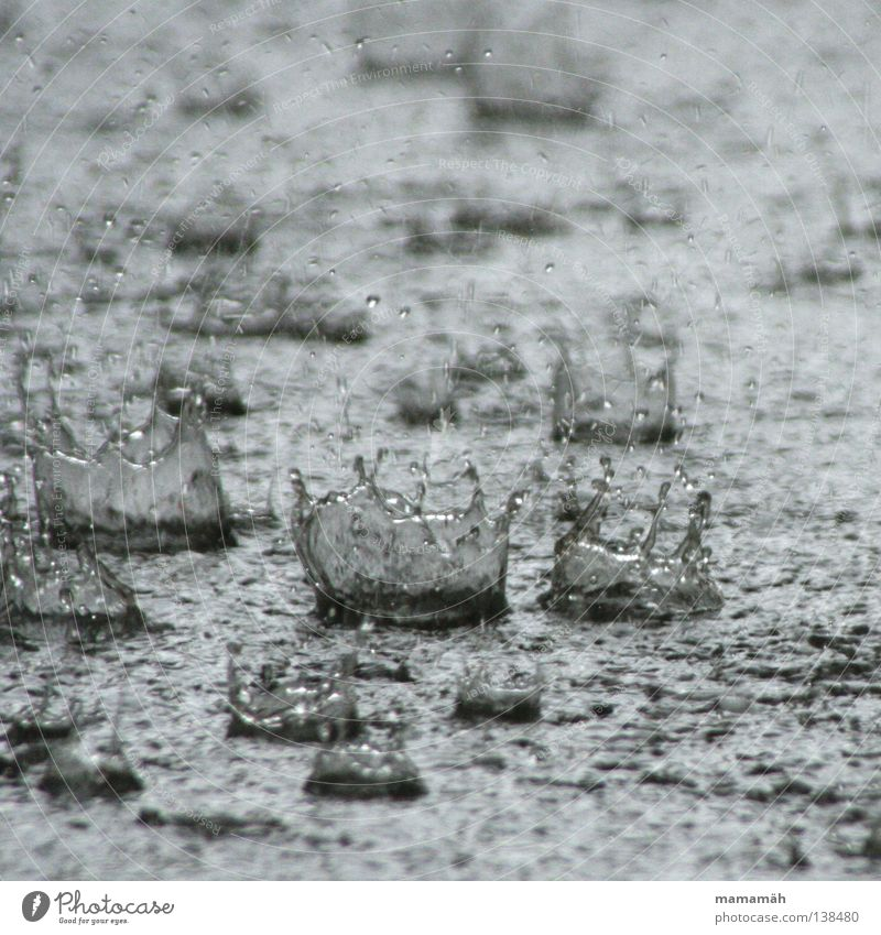 Water Rain Weather Drops of water Wet Gale Thunder and lightning Damp Storm Inject Puddle Crown Bad weather Insignia Hail