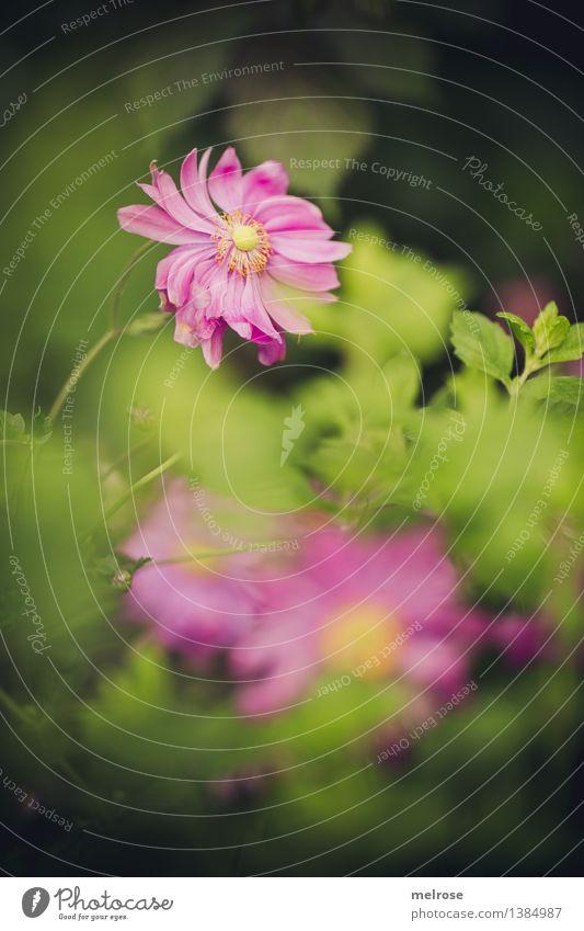 Nature Plant Green Beautiful Flower Landscape Leaf Blossom Autumn Natural Style Pink Illuminate Elegant Bushes Happiness