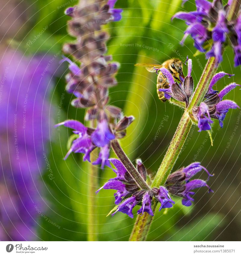 Nature Plant Green Summer Flower Animal Black Yellow Blossom Spring Garden Flying Work and employment Wild Elegant Sit
