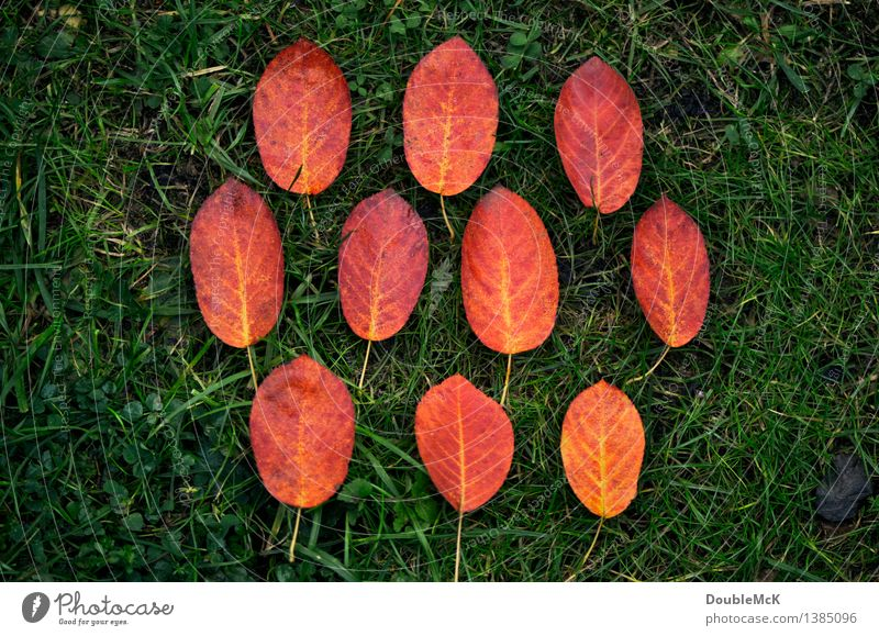 leaf by leaf Environment Nature Plant Autumn Bad weather Rain Grass Leaf Meadow Colour Transience Super Still Life Colour photo Multicoloured Exterior shot