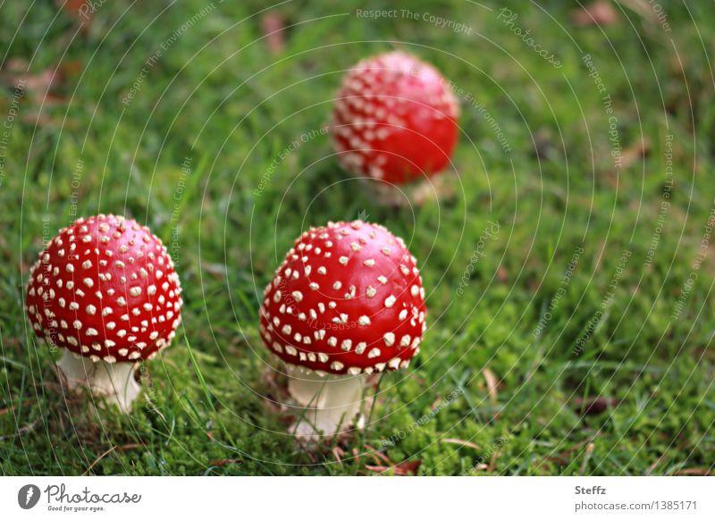 Nature Green Red Autumn Grass Fantastic 3 Mushroom Autumnal Spotted Poison October Mushroom cap Amanita mushroom Reddish green Sense of Autumn