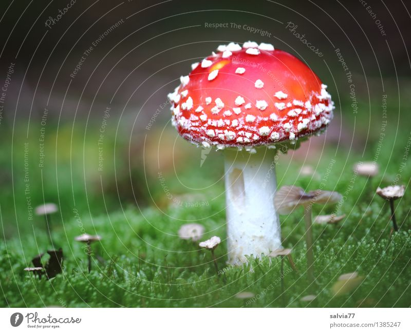 Nature Plant Green Colour White Red Calm Animal Forest Environment Autumn Happy Small Moody Growth Illuminate