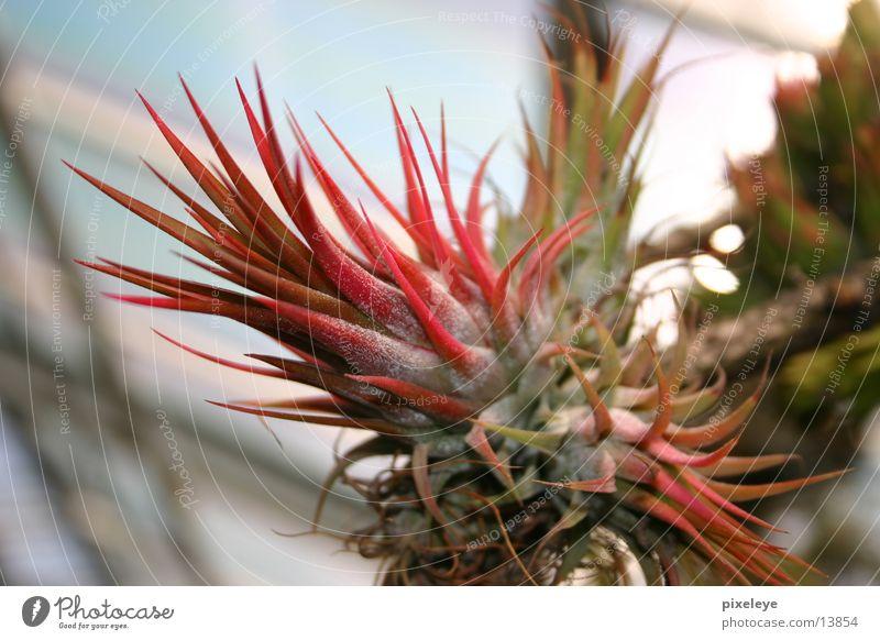 Plant Blossom Exotic Cactus