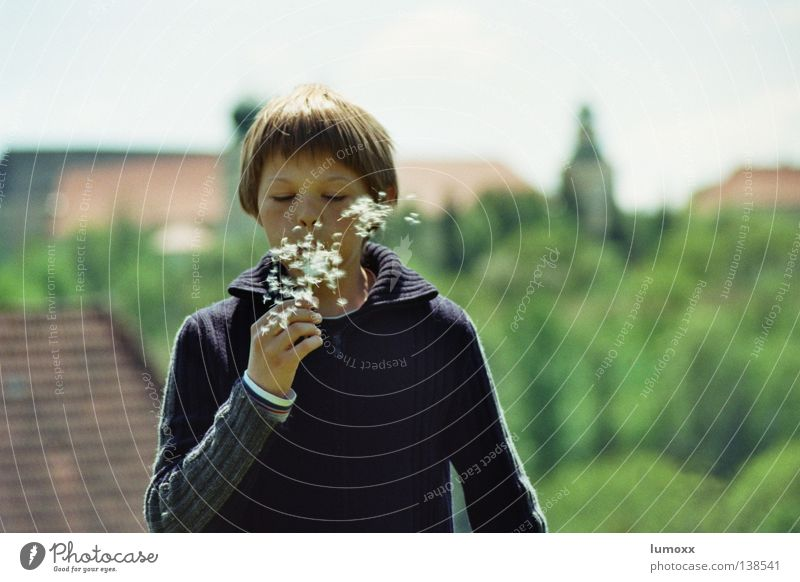Dandelion 1 Exterior shot Joy Freedom Child Boy (child) Wind Tree Flower Tower Movement Speed Floating Disperse Blow Federal State of Styria Seed blow away