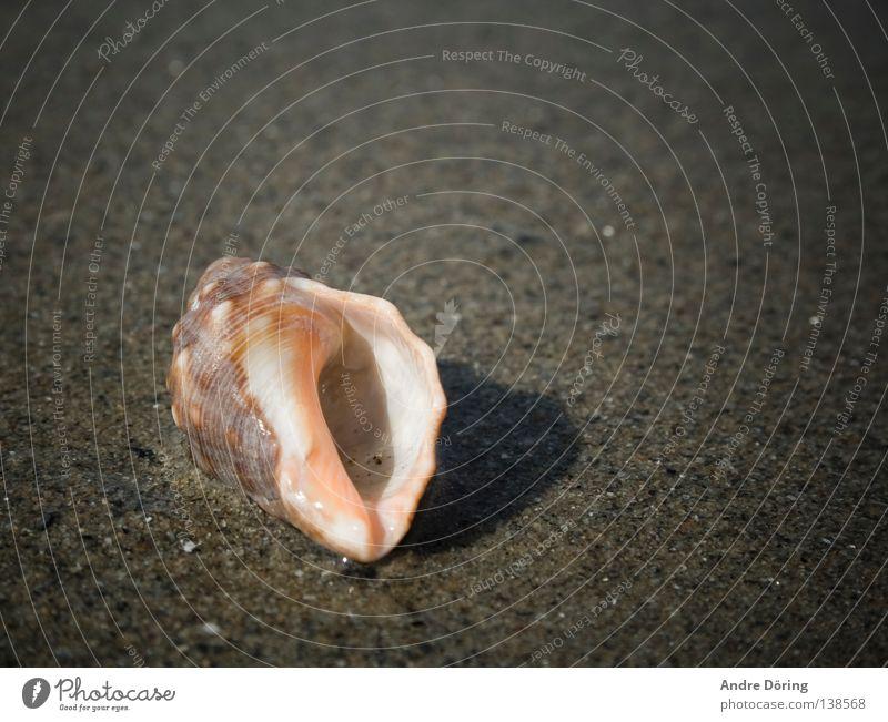 Ocean Beach House (Residential Structure) Sand Mussel Hissing Listening Flotsam and jetsam