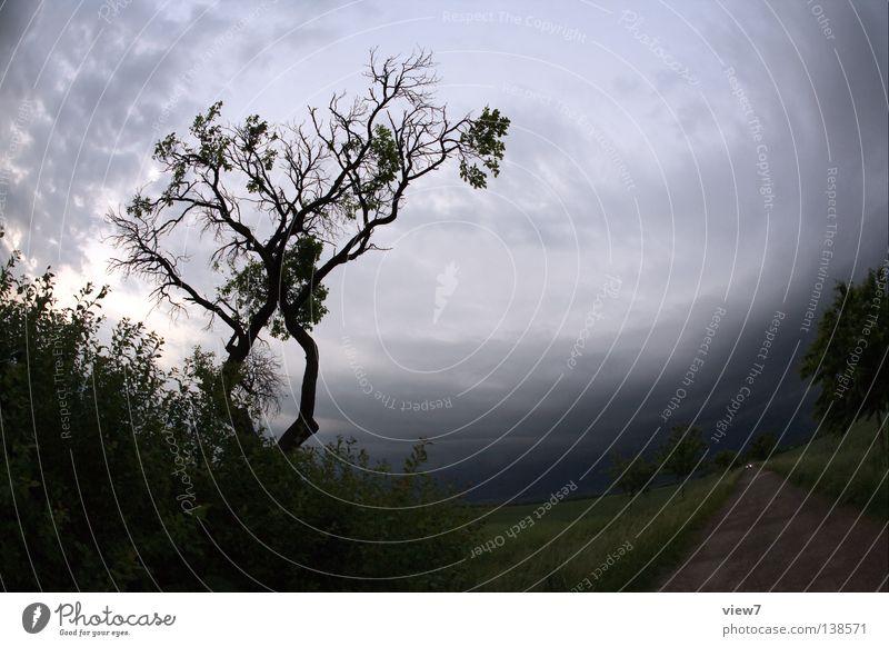 Nature Beautiful Tree Summer Leaf Clouds Far-off places Dark Meadow Emotions Sadness Lanes & trails Car Rain Field Wind