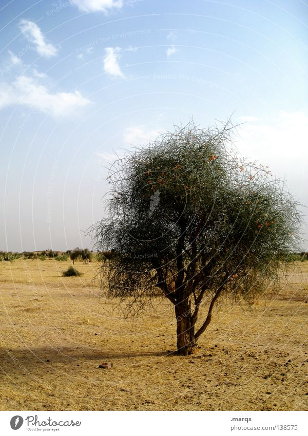 Tree Plant Summer Loneliness Far-off places Life Warmth Horizon Growth Bushes Climate Desert Physics Hot Dry India