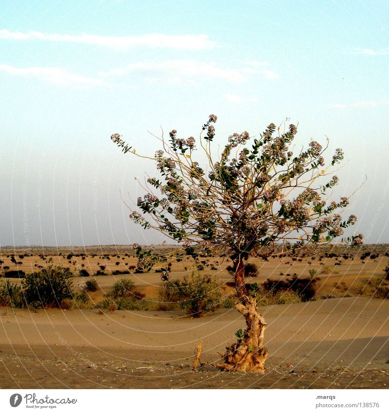 insight Growth Survive Summer Steppe Tree Plant Physics Hot Dry Loneliness Individual Horizon Bushes India Life Climate change Desert Far-off places Warmth
