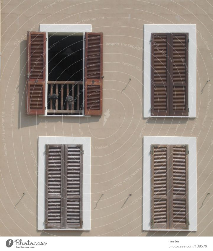 dog panorama Sardinia Window Dog House (Residential Structure) Facade Summer Detail photo graphic Architecture