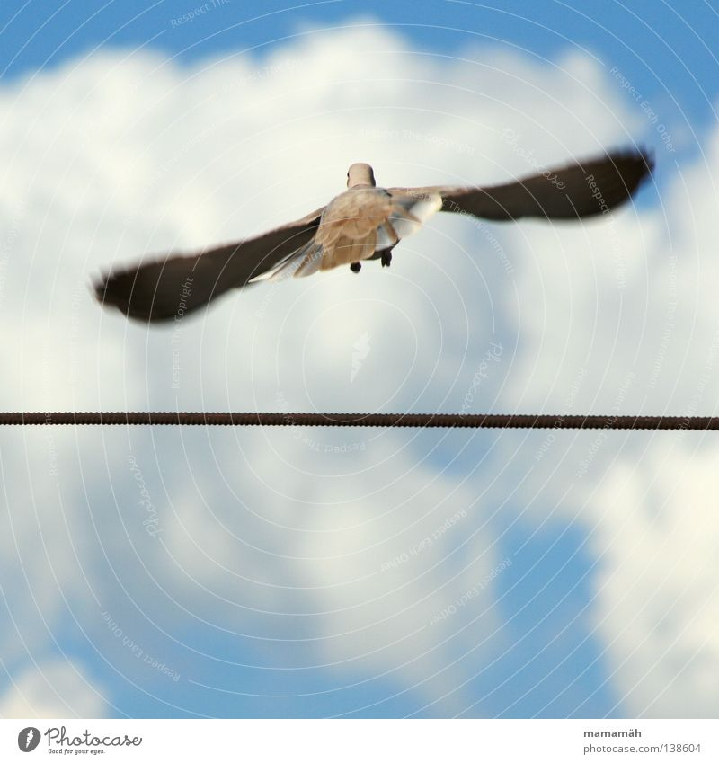 The dove on the tightrope! Part 2 Colour photo Exterior shot Day Motion blur Rope Air Sky Clouds Beautiful weather Animal Bird Pigeon Wing Flying Infinity Beak