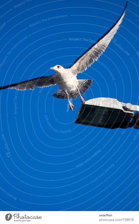 Sky White Ocean Blue Vacation & Travel Animal Lamp Bird Flying Free Aviation Lantern Seagull Departure Maritime TRavemünde