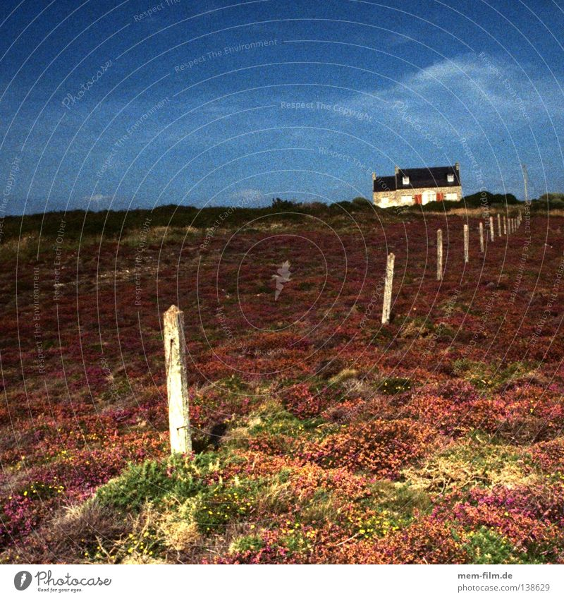 maison de vacances Vacation home France Brittany Heathland Fence Coast Evening sun Gritty Violet Ground cover plant Loneliness Remote Dream house