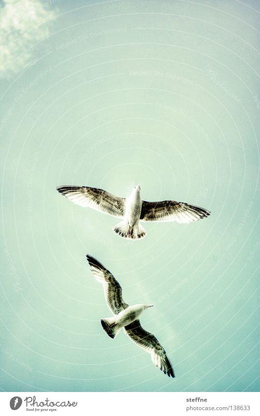 Sky Joy Clouds Freedom Happy Air Bird Flying Success Free Aviation Sailing Seagull