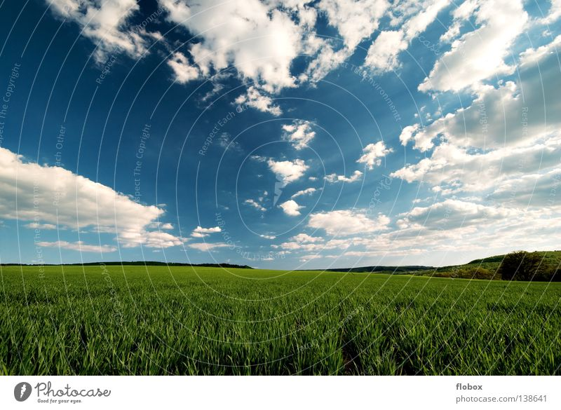 Nature Green Summer Far-off places Landscape Field Beautiful weather Clouds Agriculture Sky blue Clouds in the sky Cloud formation Cloud field