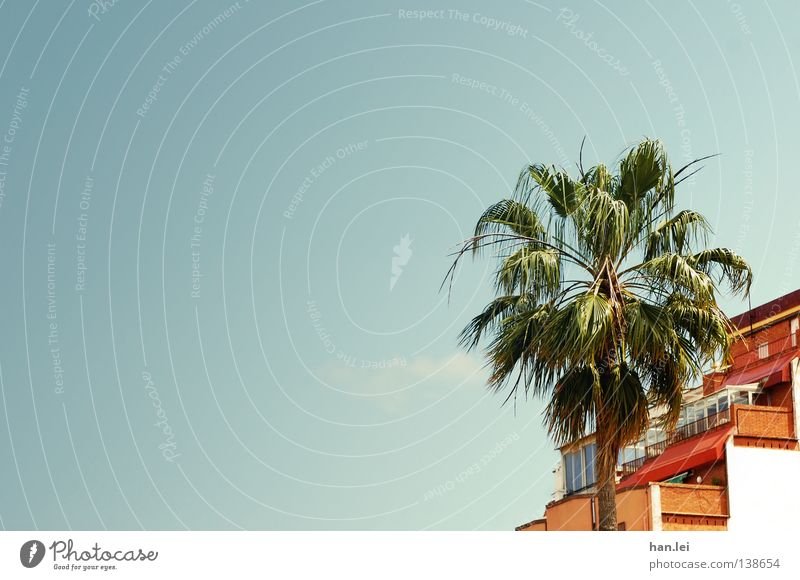 Sky Blue Tree Summer Leaf House (Residential Structure) Roof Beautiful weather Palm tree Spain Barcelona Blue sky Mediterranean South Twigs and branches