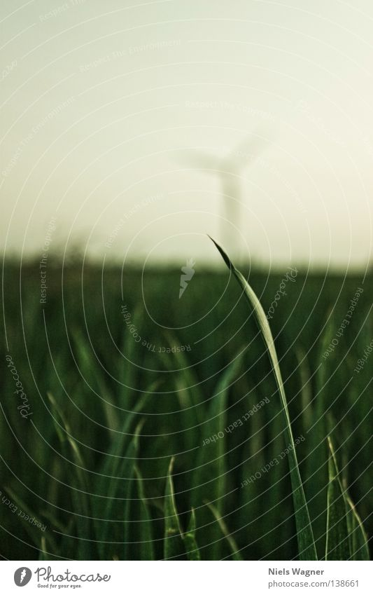 blade of grass Blade of grass Meadow Green Grass Field Blur Summer Wind energy plant Sky