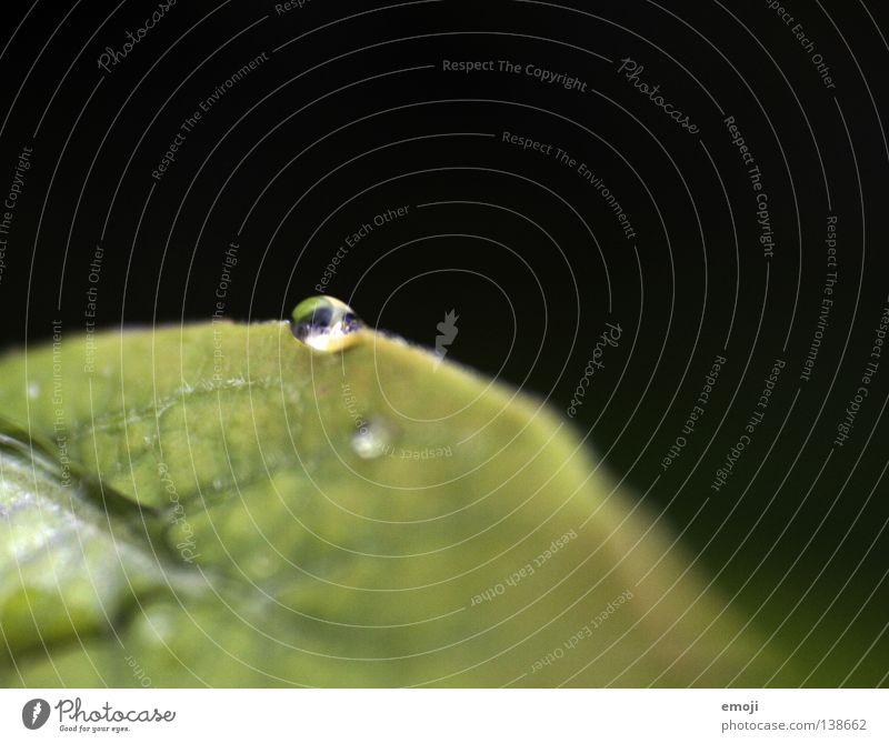 Nature Green Water Joy Dark Rain Glittering Glass Drops of water Wet Round Clarity Near Damp Bubble